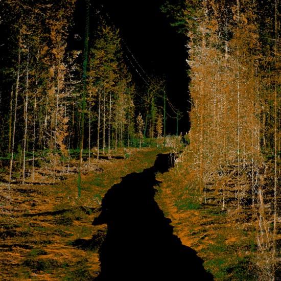 Sähkölinja metsässä