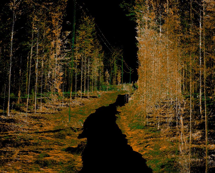 Sähkölinja metsässä - vaikutukset väyliin