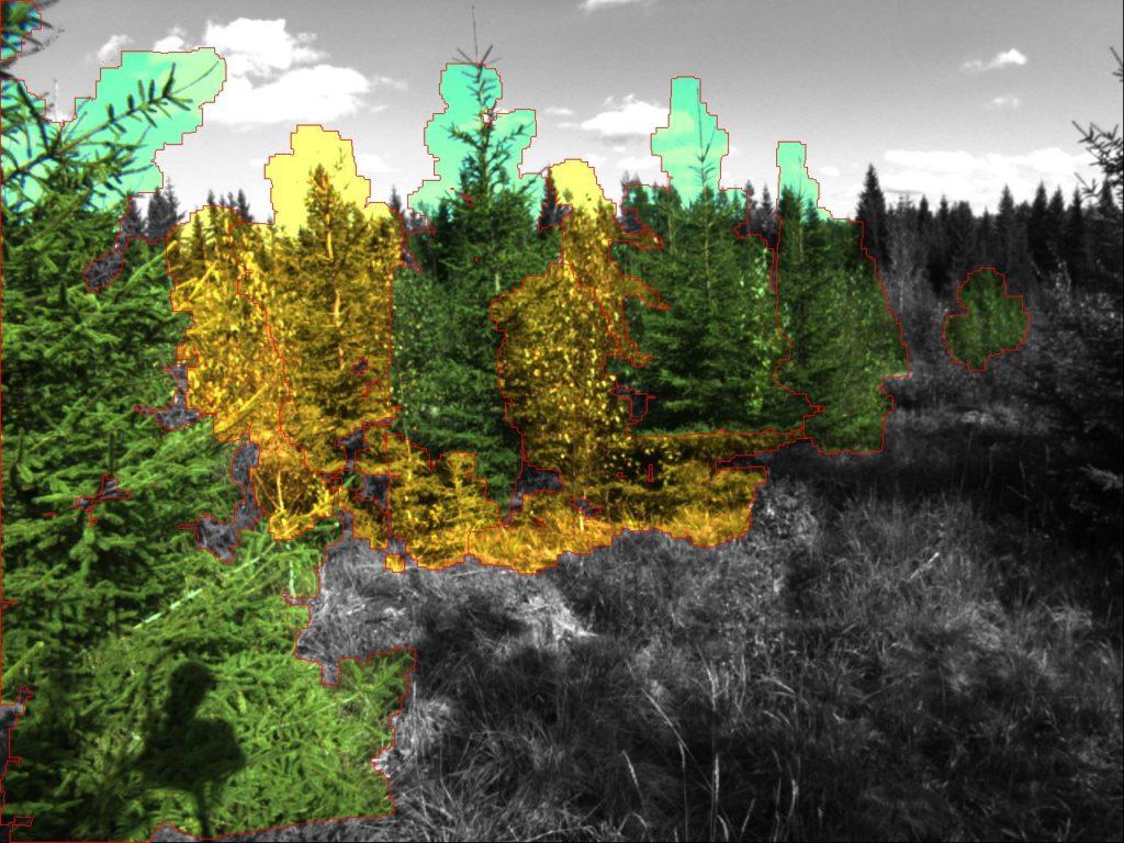 Tulevaisuudessa metsäkone tuottaa puukarttaa reaaliaikaisesti jo taimikonhoitovaiheessa